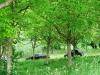 auto-nel-bosco-delleremo